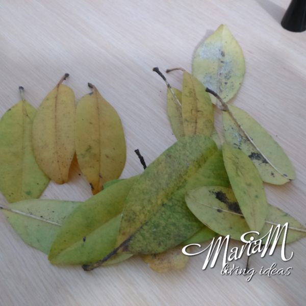 pencil holder leaves diy 5